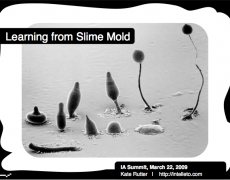 Talk :: Learning from Slime Mold [IA Summit 2009]